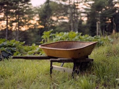 Summer Evenings – Portra 400